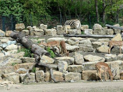 Afrika-Savanne