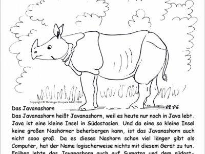 Nashorn 12