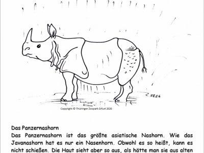 Nashorn 13