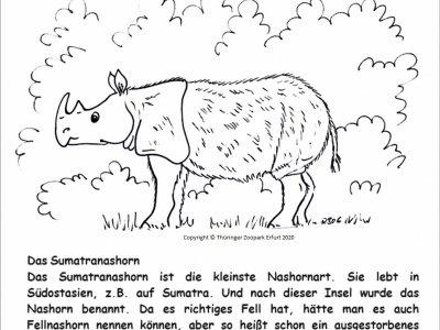 Nashorn 14