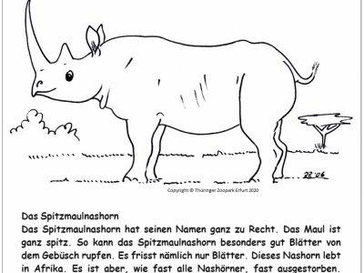 Nashorn 15