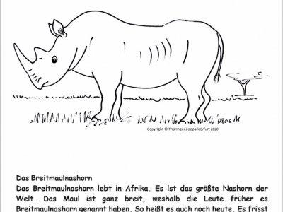 Nashorn 03