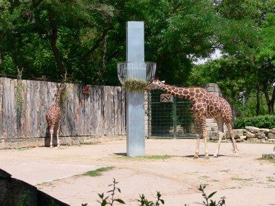 Giraffenanlage