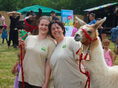Lama zu Events im Zoo