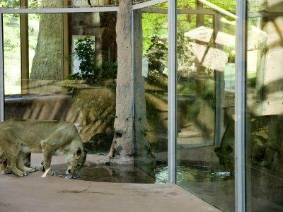 Innenbereich der Löwen-Savanne