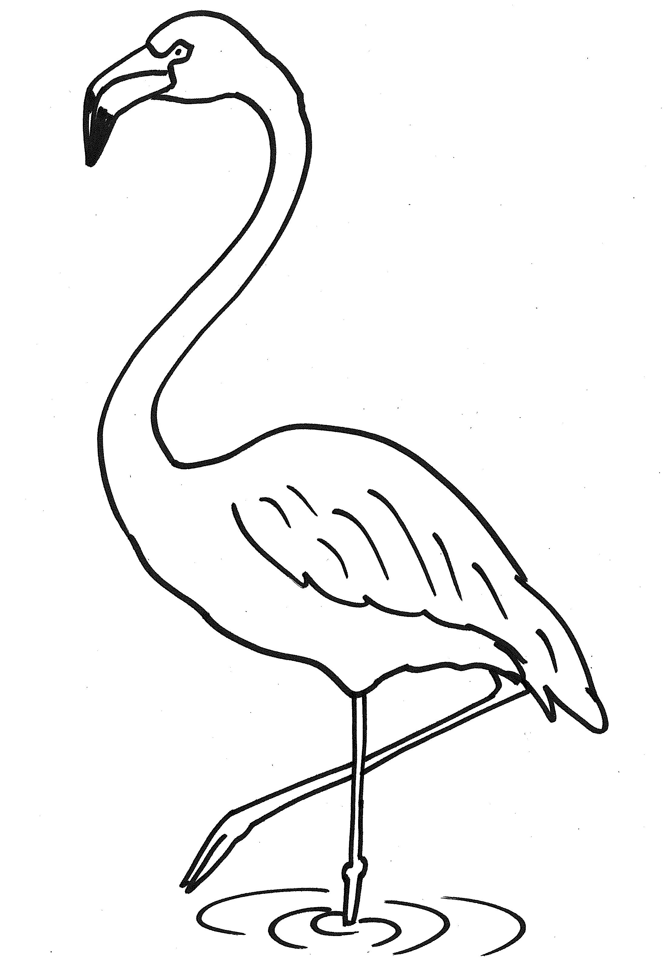 Flamingos / Zoopark Erfurt