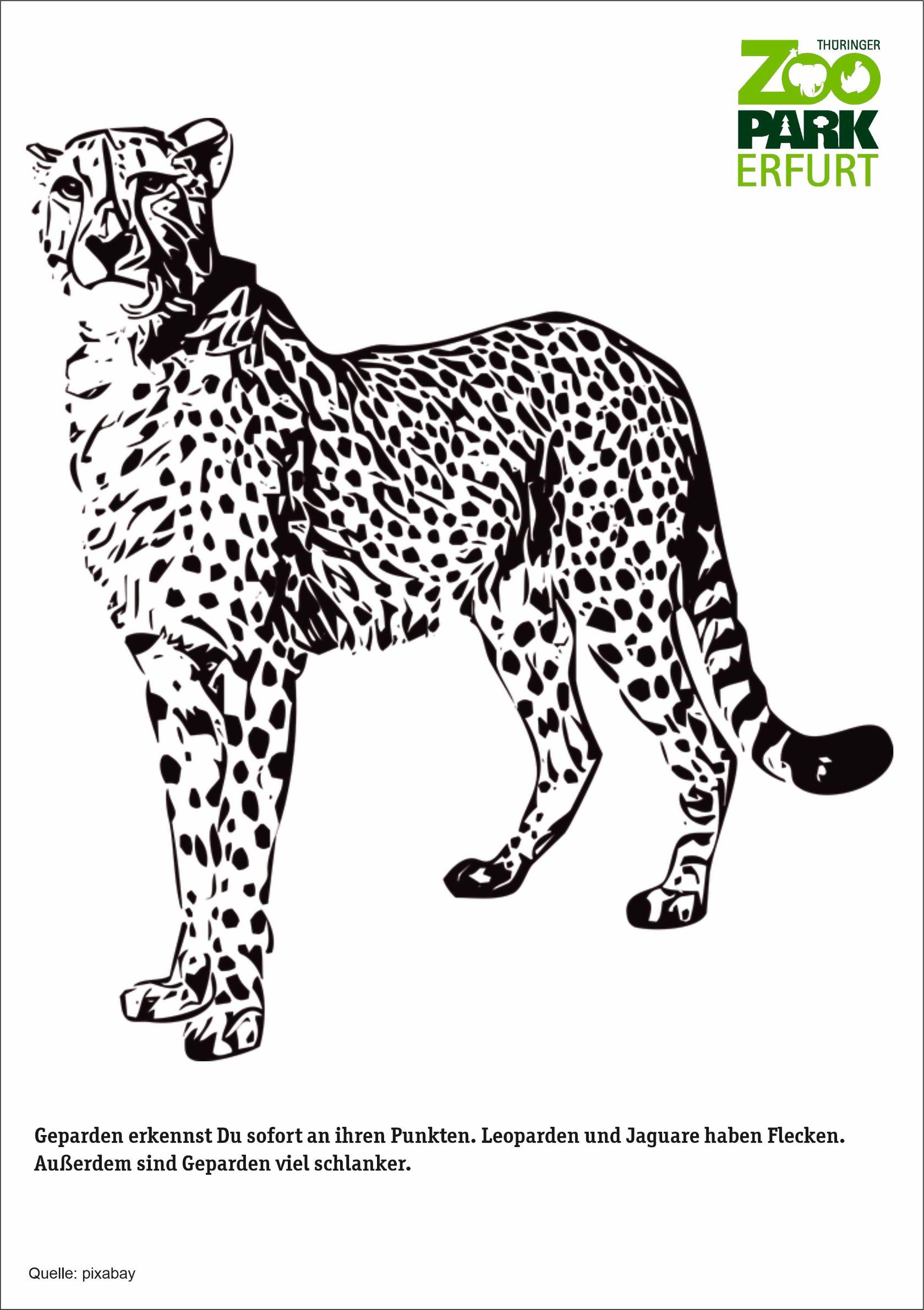 geparden  zoopark erfurt